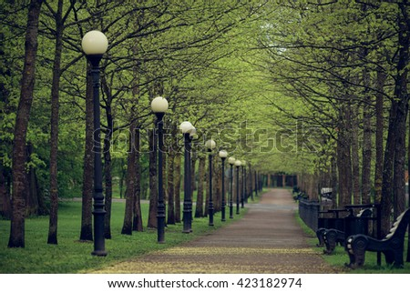 Oak trees with fresh leaves on springtime alley, perspective view with selective focus - stock photo
