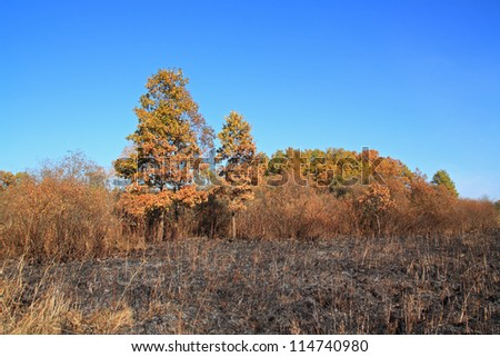 oak wood after strong fire - stock photo