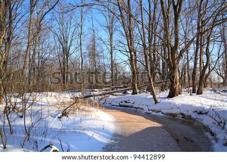 oak wood on river coast - stock photo