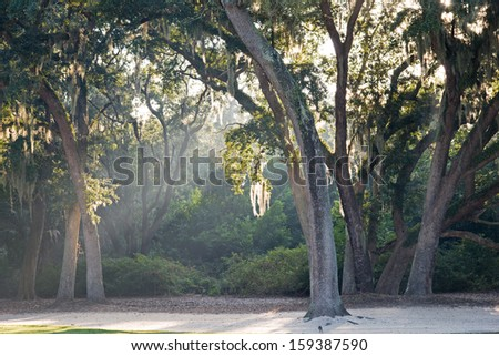 Oaks with Spanish Moss and rays of light reflecting off morning fog - stock photo