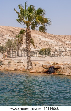 Oasis in the Desert - stock photo
