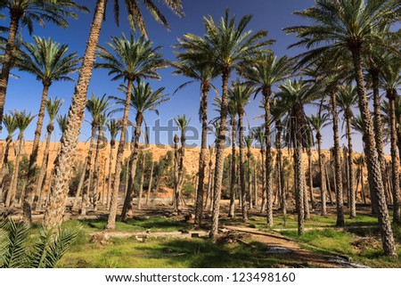 Oasis in the middle of a desert (Oman) - stock photo