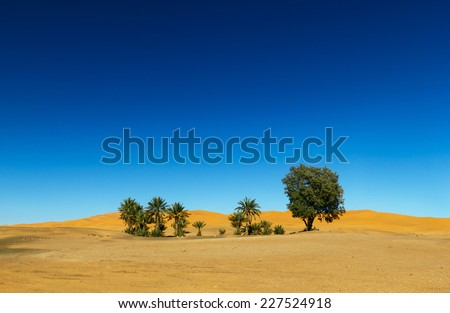 Oasis in the Sahara desert in Morocco  - stock photo