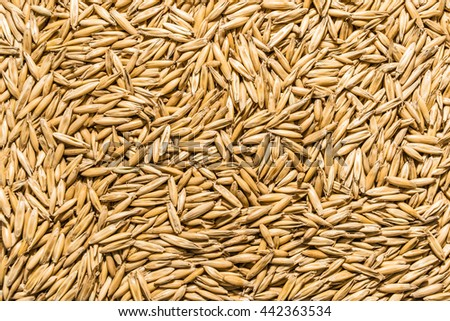 Oat seeds background