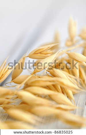 Oat wheat on a wooden table, soft focus