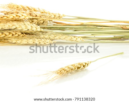 oats an isolated on white background