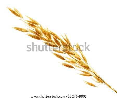 oats cereals grain isolated on white