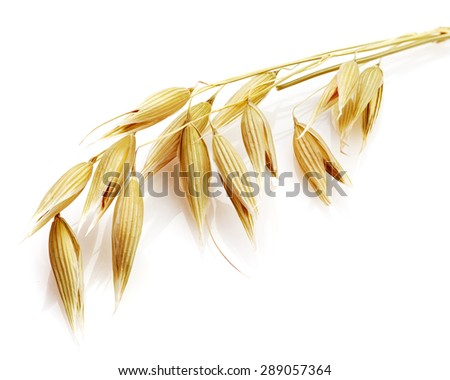 oats grain cereal isolated on white