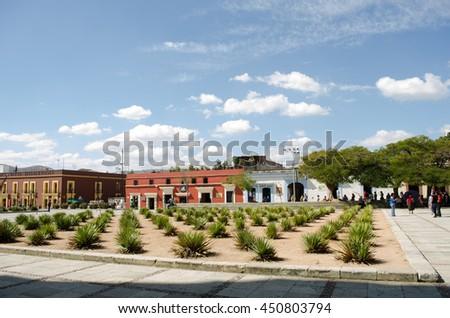 OAXACA, OAXACA, MEXICO- MARCH 21, 2013: Maguey garden in a sunny day at Santo Domingo, Oaxaca, Mexico - stock photo