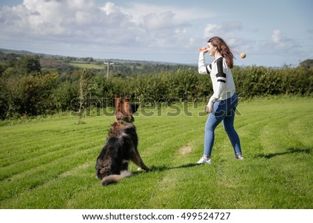 Obedient dog sits patiently waiting for his owner to through his ball