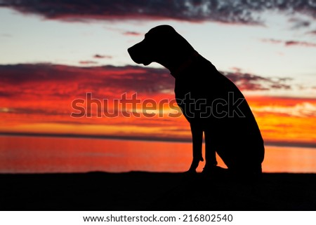 obediently sitting dog with sunset reflecting into clouds in the background - stock photo
