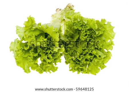 object on white - food lettuce close up