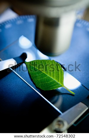 observation of a green leaf with a microscope - stock photo
