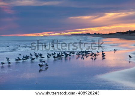 OBX Outer Banks sea gulls on sunset beach, North Carolina, NC, USA