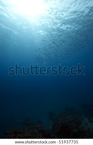 ocean and fish - stock photo