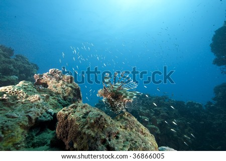 ocean and lionfish - stock photo