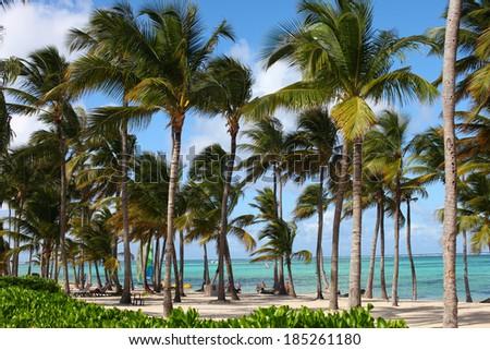 ocean coastline work palm and tree in republica dominicana - stock photo