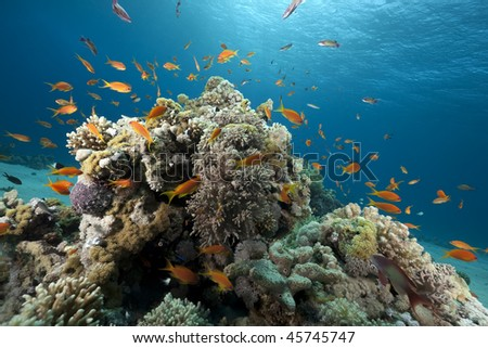 Ocean, coral and fish taken in the Red Sea.