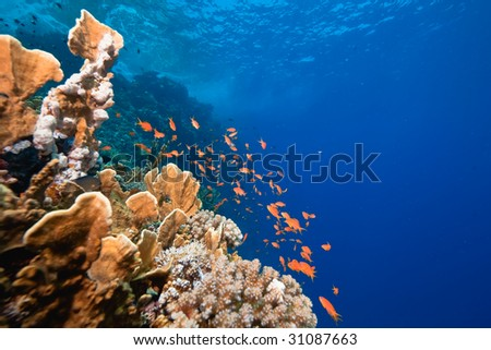 ocean, fish and coral - stock photo