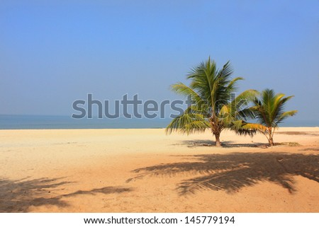 Ocean in India - a wild beach with palm trees