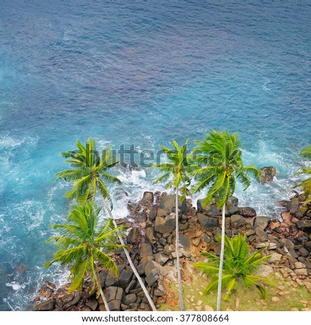 ocean, rocky shore and coconut palms (top view) - stock photo
