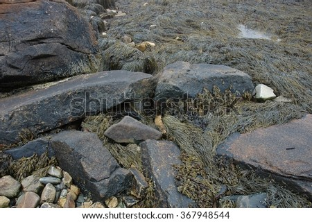 Ocean shoreline near Bar Harbor, Maine and Acadia National Park.  Seaweed, rocks, sand and shells along the shore by the sea.