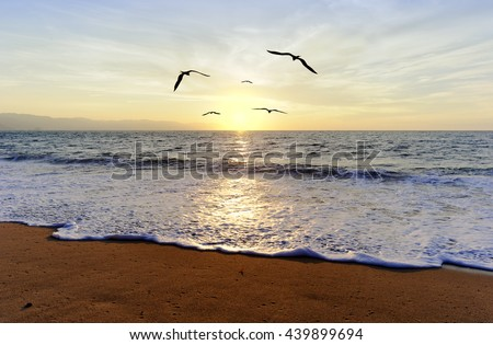Ocean sunset is five silhouetted birds flying towards the light of the setting sun.
