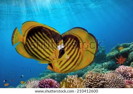 Ocean Underwater Background Image, Red Sea, Egypt - stock photo