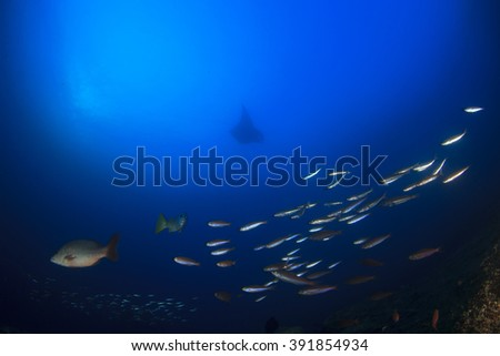 Ocean underwater scene with fish and manta ray on coral reef - stock photo