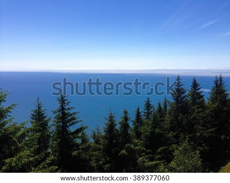 Ocean View Over Trees