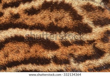 ocelot fur closeup - stock photo