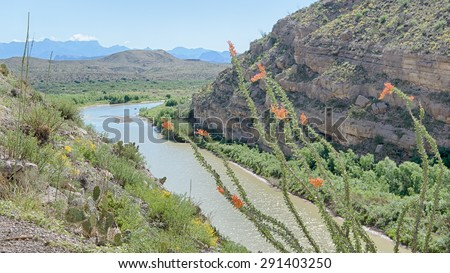 Ocotillo in Santa Elena Canyon; Chisos Mountains in the background, on the Ross Maxwell Scenic Drive, in Big Bend National Park, Texas. The Rio Grande is the border between USA and Mexico. - stock photo
