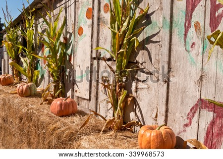 october halloween pumpkins and corn stalks - Halloween Corn Stalks