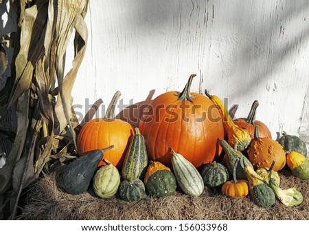October Harvest - stock photo
