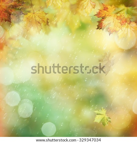 October rain in the forest, abstract environmental backgrounds - stock photo