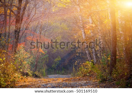 October sunrays from russian forest