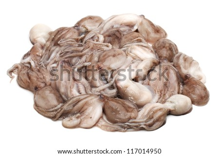 Octopus on white background - stock photo