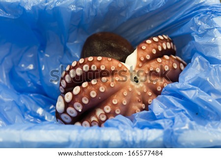 Octopus sell in Tsukiji market Japan - stock photo