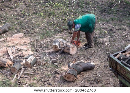ODESSA, UKRAINE - July 31, 2014: Workers loggers purified city squares from dry dead trees. Men in overalls cropped branches and tree trunk Chainsaw July 31, 2014 in Odessa, Ukraine.