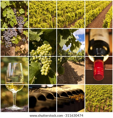 Oenology and wine collage - stock photo