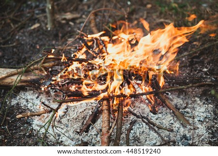 Of forest fire of trees, bright flames and burning firewood, background