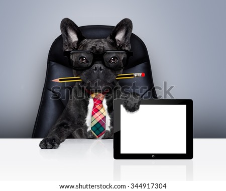 office businessman french bulldog dog with pen or pencil in mouth  , behind laptop pc tablet screen ,  sitting on a leather chair - stock photo