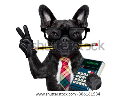 office businessman french bulldog dog with pen or pencil in mouth holding a  calculator and   peace or victory fingers isolated on white background - stock photo