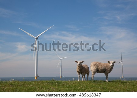 Offshore Windturbines in the IJsselmeer, The Netherlands with standing sheep on the grass dike.