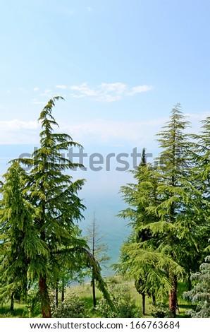 OHRID, MACEDONIA, MAY 18, 2011. Coniferous Trees in the shore of lake Ohrid. - stock photo