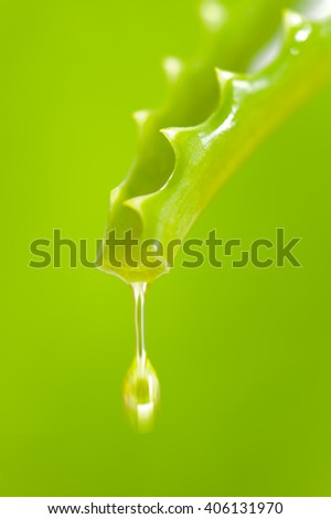 oil drop is falling down from aloe vera cactus - stock photo