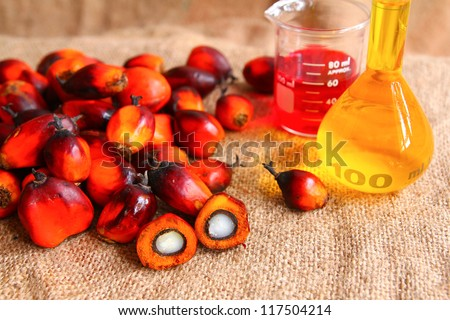 Oil Palm fruits with palm oil - stock photo