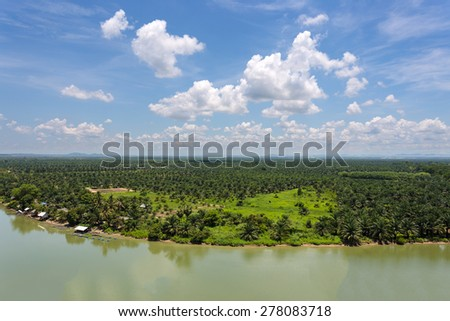 Oil palm plantations - stock photo