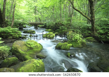 Oirase Stream - stock photo