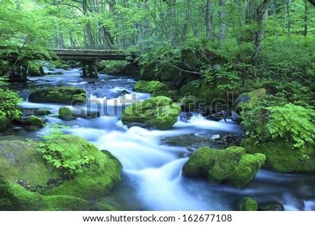 Oirase Stream - stock photo